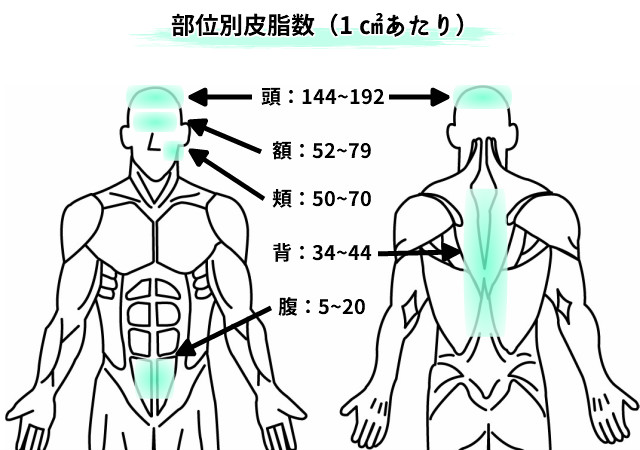 皮脂腺の多い部位