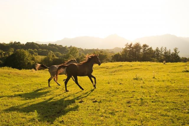 馬プラセンタエキス